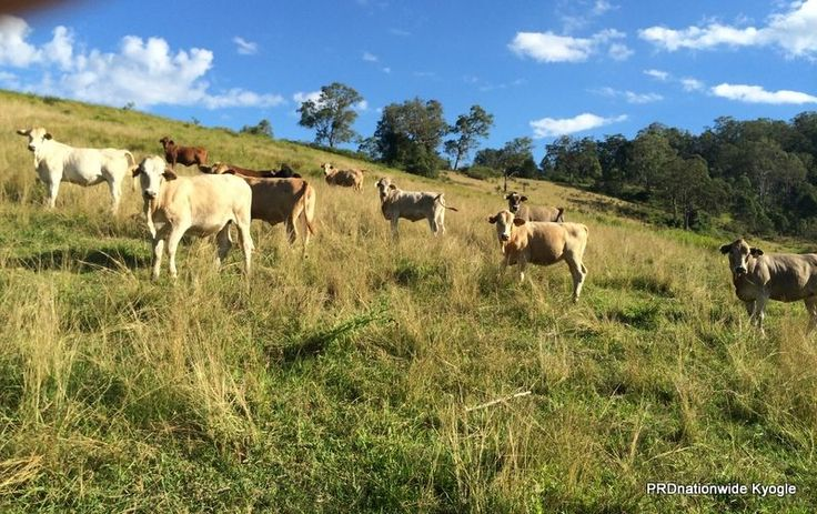 270 O'Donnell Creek Road, Kyogle NSW 2474, Image 0