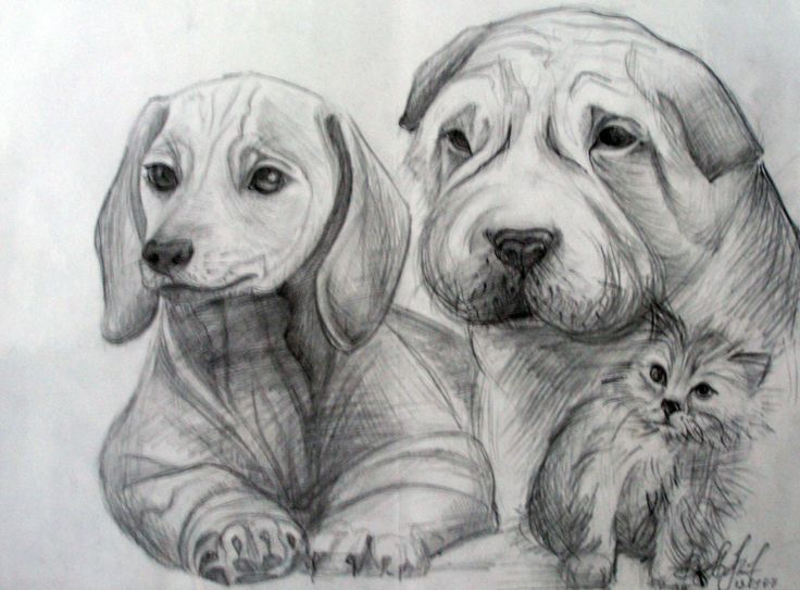 Drawing in pencil (Аnimals)