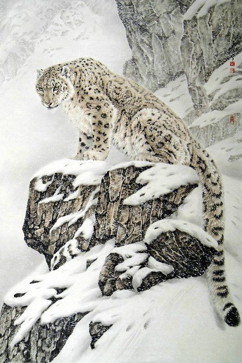 Snow leopard- Love these beautiful gentle giants of nature. They have graceful feathery paws and long furry tails.