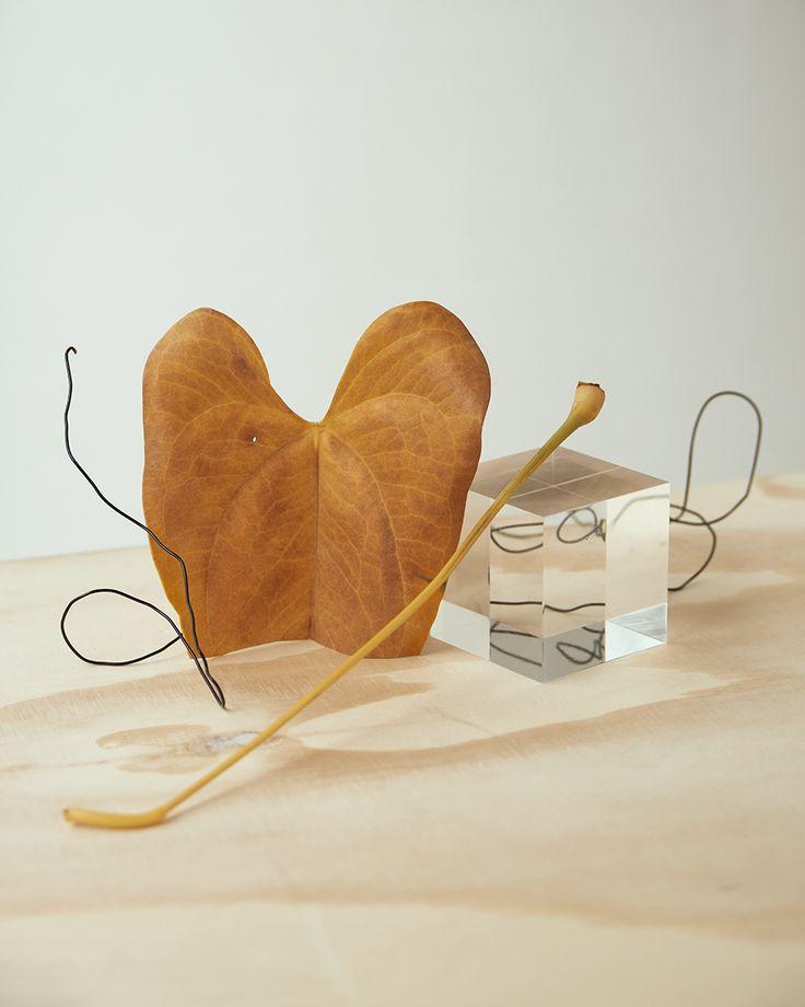 Still life Personal Project - David Abrahams