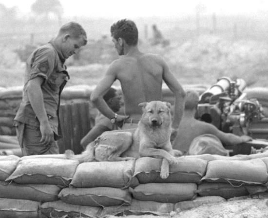 Viet Nam. The American GI has always adopted the animals that no one else wants. Is it any wonder these stray dogs hang with the Americans?