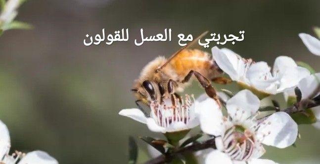 تجربتي مع العسل للقولون Bee Animals Colon