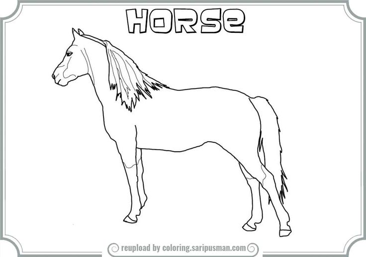 morgan prancing horses coloring pages coloring pages