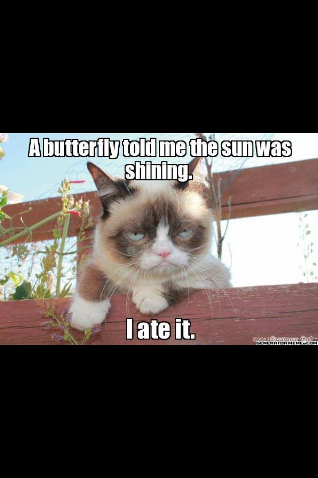 332 Best Images About Grumpy Cat, LilBub & Pokey
