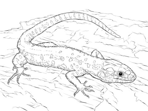 Yellow Spotted Tropical Night Lizard Coloring Page From Lizards Category Select 25997 Printable Crafts Of Cartoons Nature Animals Bible And Many