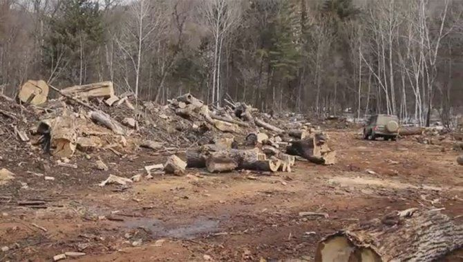 16×9: An investigation into illegal lumber - National | Globalnews.ca