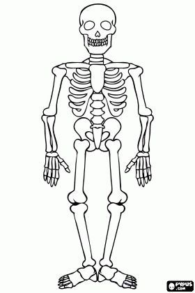 Iskelet Boyama Google Da Ara Dekokin Iskelet Iskeletler