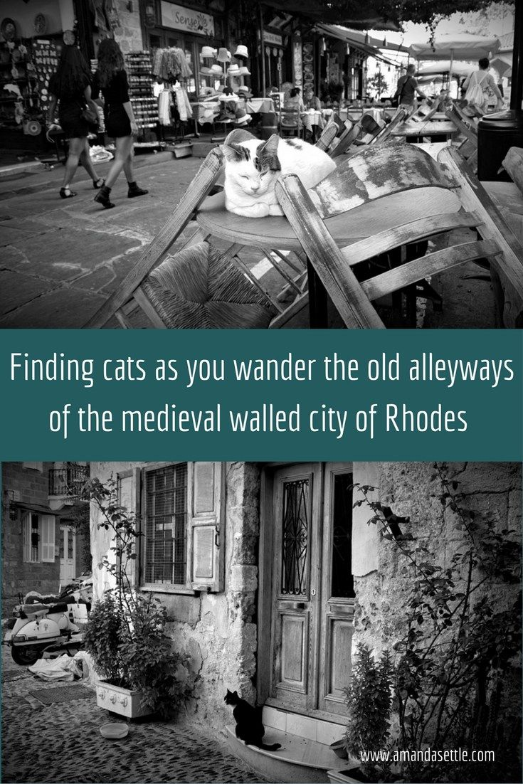 black and white pictures of cats in the medieval walled city of Rhodes Greece