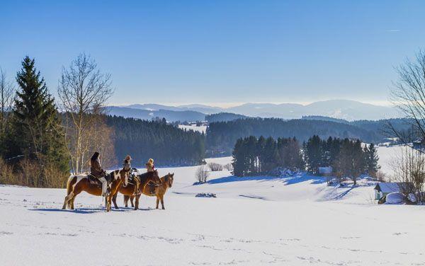 #Winterreiten durch die verschneite #Winterlandschaft im #Mühlviertel. Alle Infos und Angebote unter www.muehlviertel.at/winterreiten ©Stonehill Ranch/Kastner