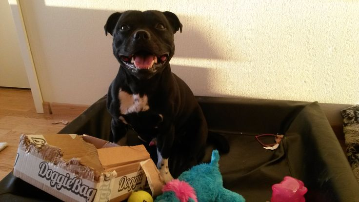 Zeke - DoggieBag.no #DoggieBag #Hund