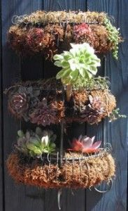 Three tier wire rack filled with moss and mini succulents