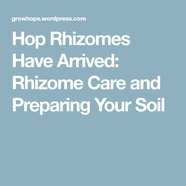 Hop Rhizomes Have Arrived: Rhizome Care and Preparing Your Soil
