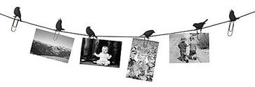 Birds on a Wire Photo Display - eclectic - frames - Paper Source