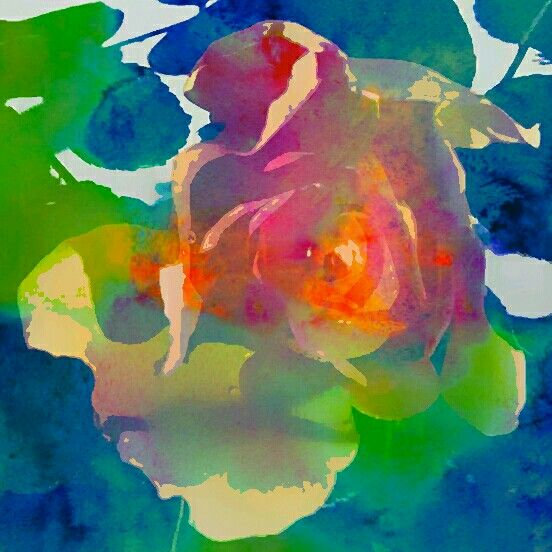"""""""Shadowed Rose""""   Original watercolour painting  by  Irena Kristina Rose Forrester              copyright  2015  all rights reserved"""