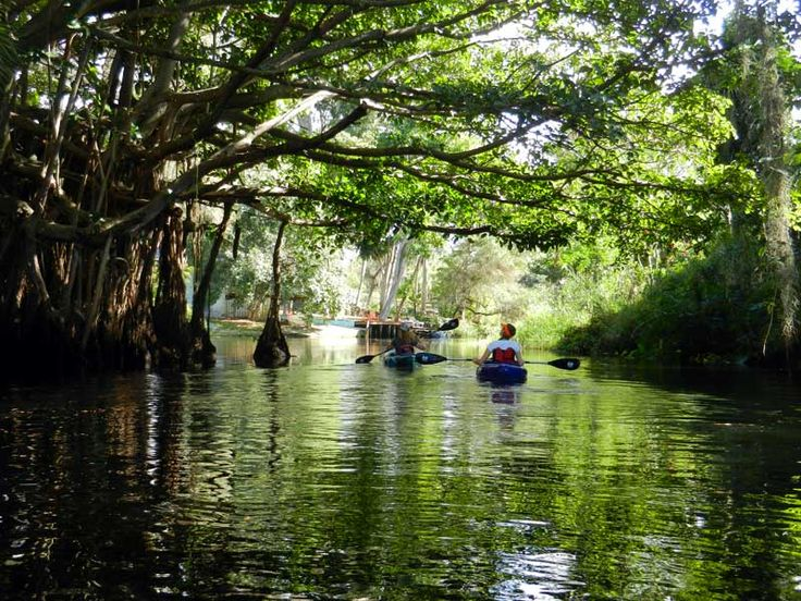 4 Florida Kayak trips that are not famous but should be - Imperial River kayak trip, Bonita Springs