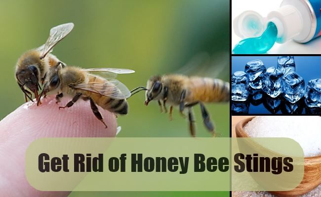 Personal Care, Get Rid Of Honey Bee Stings You Can Do One Of The Following Simple Tips The Natural How To Get Rid Of Bee Sting Pain Will Give Tips When You Are Stung By Bees Are Not Very Soluble In Pain Sens ~ You Can Do One Of The Following Simple Tips The Natural How To Get Rid Of Bee Sting Pain
