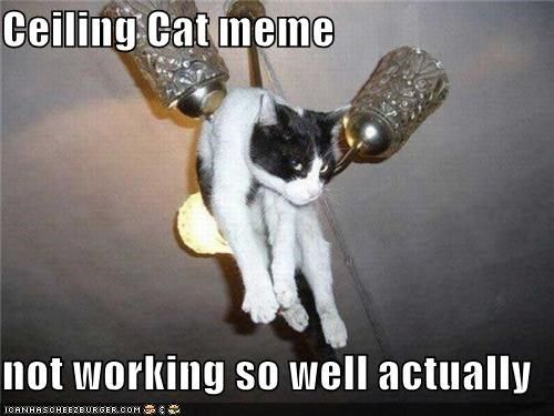 Funny Cat Drinking Meme : Ceiling cat meme not working so well actually memes