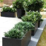 25 Best Trough Planters Ideas On Pinterest Plant