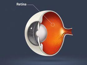 Şu Anda Bu Yazıyı Okumanızı Sağlayan Şeylerden Biri, Retina Hücrelerinizde Oluşan Oksijen Çözünmesidir.