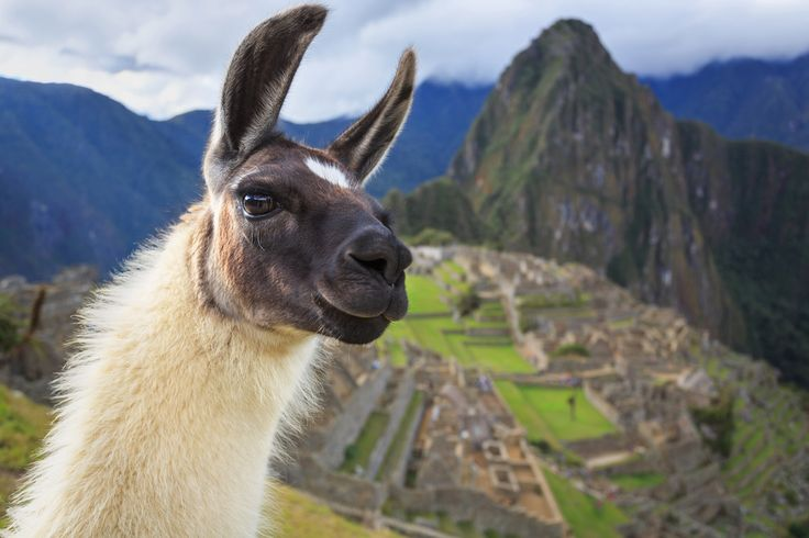 A traveler's ticket to the great Lost City of the Incas, the winding tracks  of the Inca Trail now represent one of the most iconic hikes on the planet.  Thousands of people every year come to wax up the walking boots and hit the  ancient paths that were first laid by the mighty pre-Colombian emp