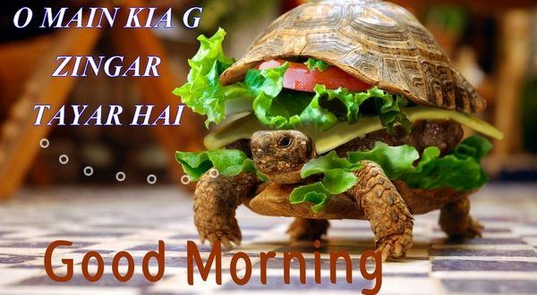 Very Funny Good Morning Images your Frinds