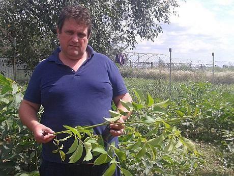Business-ul cu nuci este una dintre cele mai bune oportunități de afaceri agricole în acest moment. Pentru a înființa o livadă de nuci, investiția variază de la câteva sute de euro la 10.000