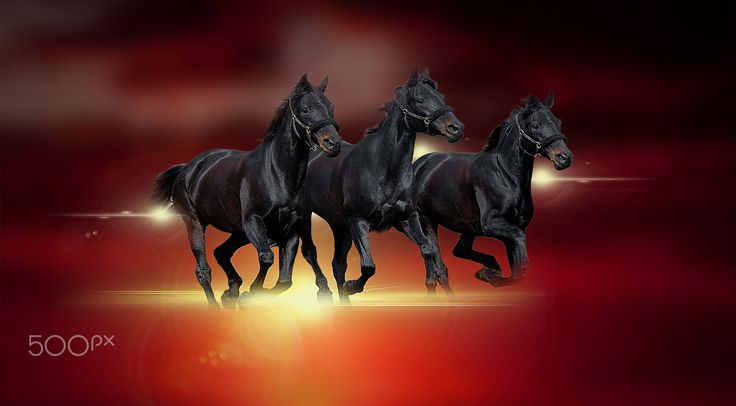 Three black horses - null