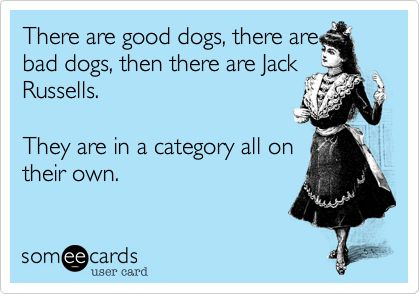 There are good dogs, there are bad dogs, then there are Jack Russells. They are in a category all on their own. - Haha yes!