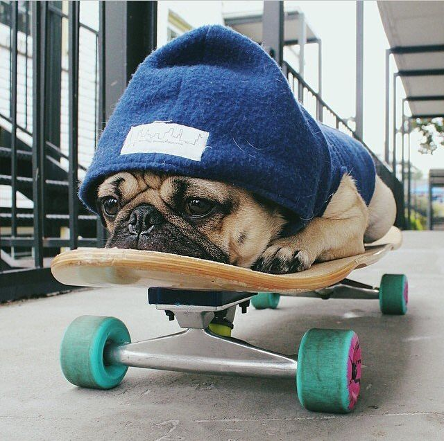 I trying to teach Heidi to do this but actually skateboard.