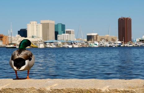 89 Best Images About Norfolk Virginia The Place Where