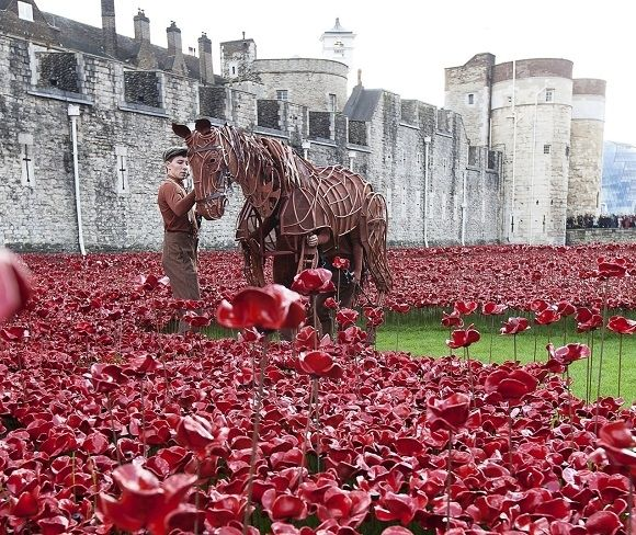 Michael Morpurgo, the bestselling author of War Horse & star of the play, Joey paid a visit to the 'Blood Swept Lands and Seas of Red at the Tower of London' at the Tower of London [19.10.2014]. Created in remembrance of each British military fatality that fell during WWI. Created by ceramic artist Paul Cummins, with setting by stage designer Tom Piper, 888,246 ceramic poppies will progressively fill the Tower's moat over the year.