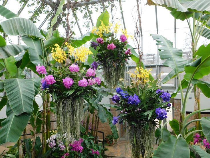 17 Best ideas about Orchid Show on Pinterest Patrick blanc Wall