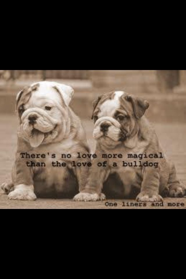 There's no love more magical than the love of a Bulldog!