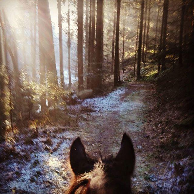 Neujahresritt :-) ich hoffe, ihr seid alle gut im Jahr 2017 angekommen! Ich muss mich jetzt aufwärmen, bin ziemlich durchgefroren brrr. ❄️ #ausreiten #renegades #barhufunterwegs #wald #muehlviertel #winter #warmblut #equestrians #horsebackriding #horse #horses #wood #happynewyear