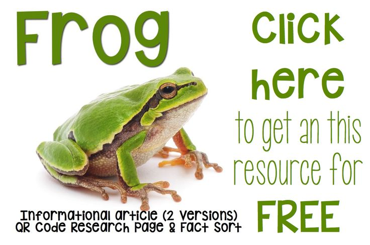 1000  Images About Frogs On Pinterest