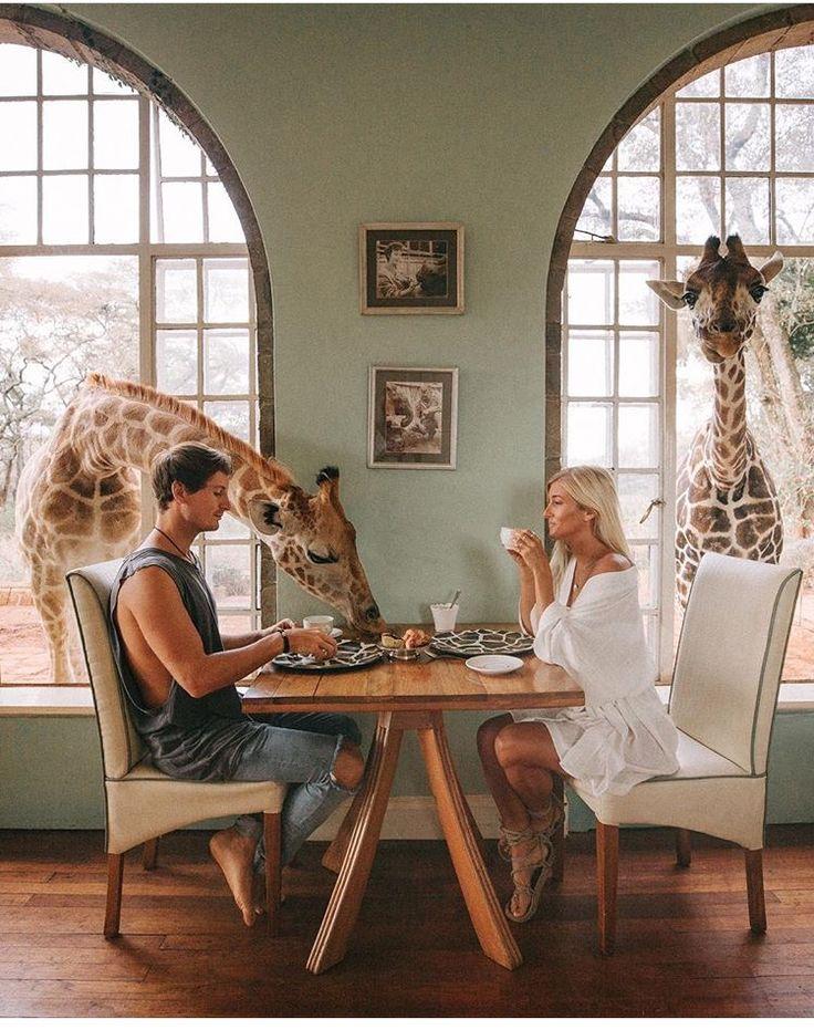 Giraffe manor- Kenya, africa
