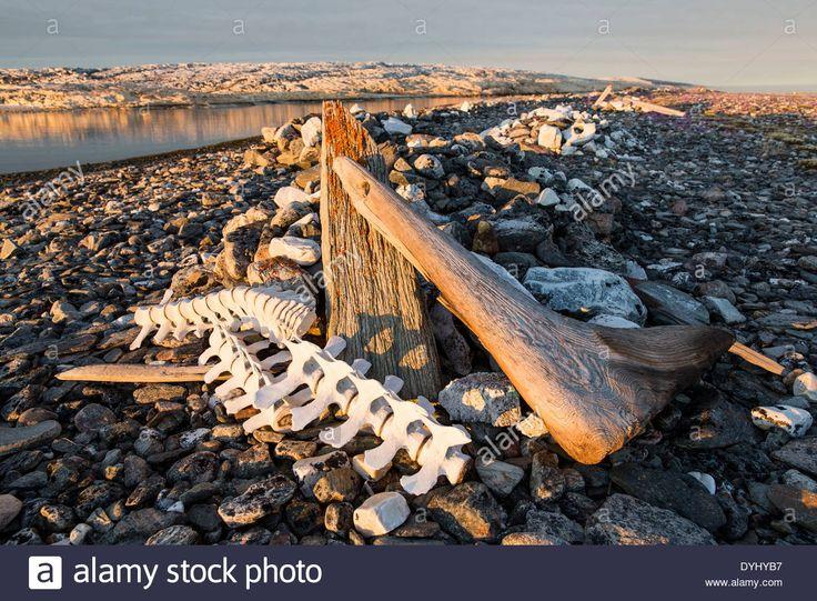 http://www.alamy.com/stock-photo-canada-nunavut-territory-beluga-whale-bones-marking-whalers-grave-68621483.html
