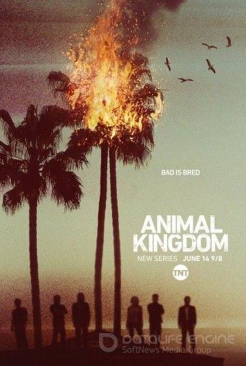 По волчьим законам / Animal Kingdom (2016)