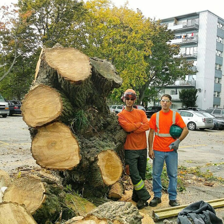 Get ur tree care done before the winter storm no job is to big or to small call for a free estimate today 6475458733