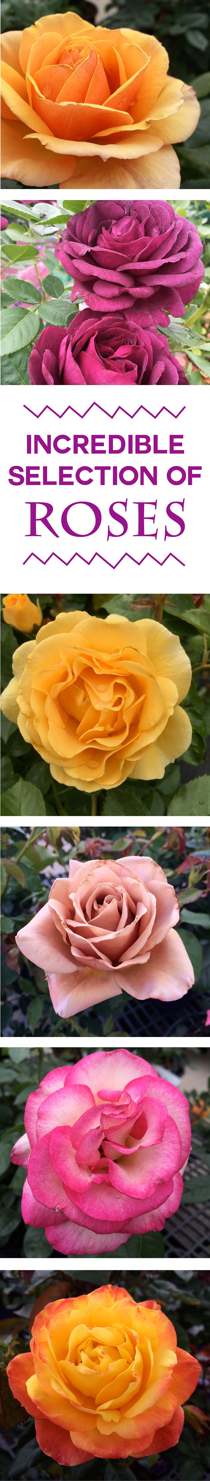 25 best most popular flowers ideas on pinterest care of its the best time of year to come shop and sniff the most popular flower in dhlflorist Image collections