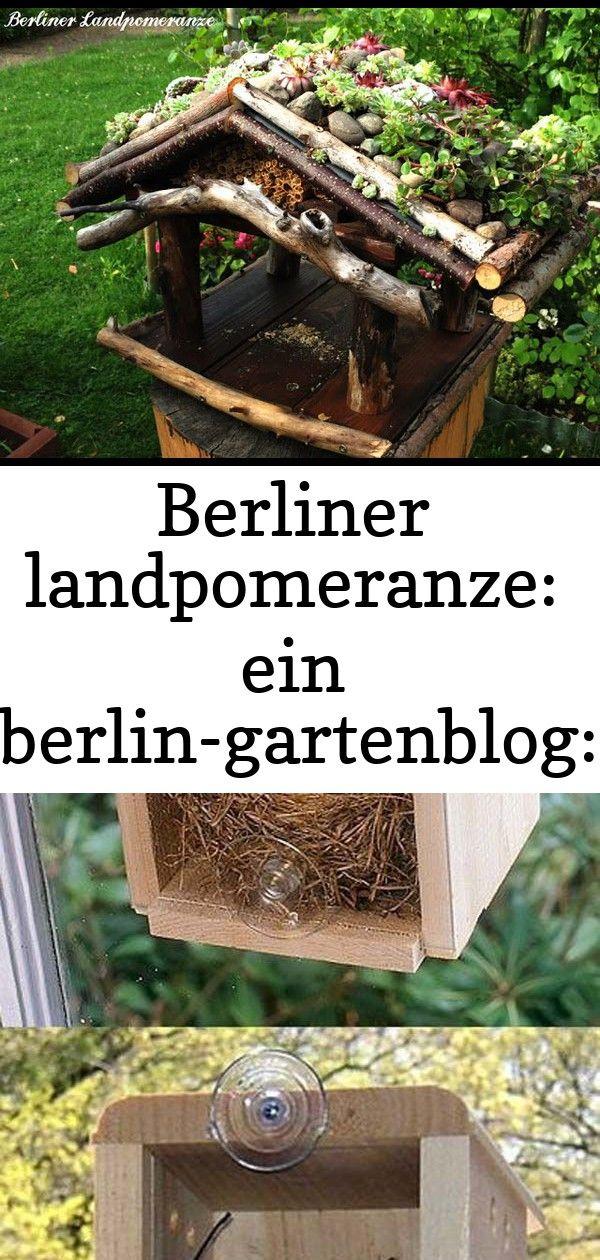 Berliner Landpomeranze Ein Berlin Gartenblog Diy Vogelhaus Mit Dachbegrunung 16 Einfache Und Geniale Diy Vogelhauschen Fur Ihren Gart Wood Wood Watch Crafts