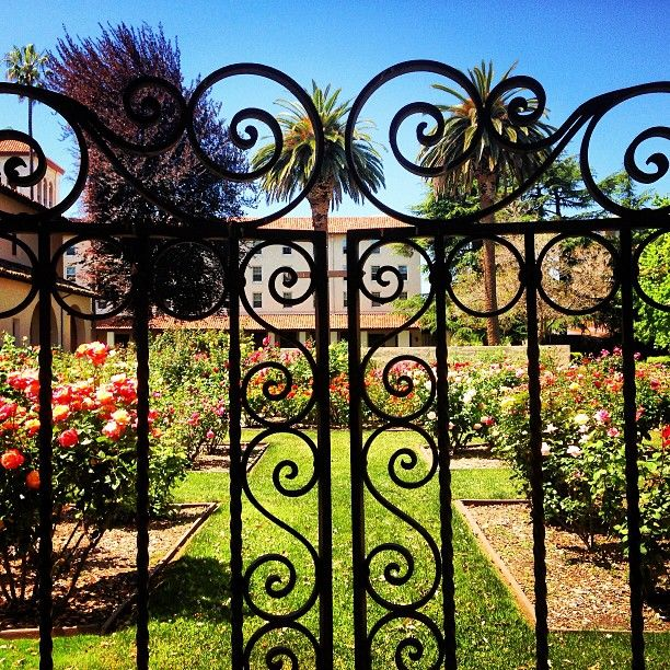best santa clara university ideas santa clara  instagram user cpliston got a great shot of our rose garden santa clara university santa clara universityessay promptswedding