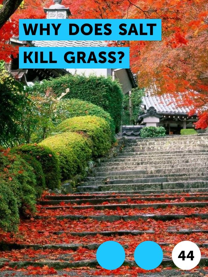 Why Does Salt Kill Grass Citrus Trees Shrubs Plants