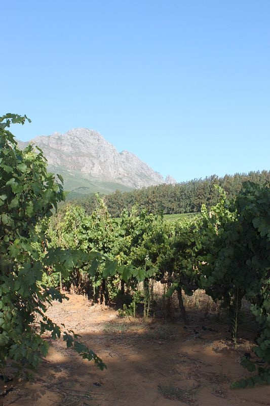 Wine Country, Paarl, South Africa
