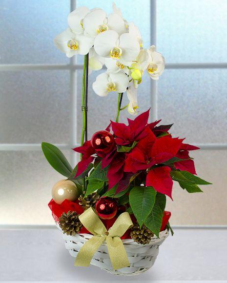 Aranjament cu Steaua Craciunului, orhidee, globuri şi conuri de brad