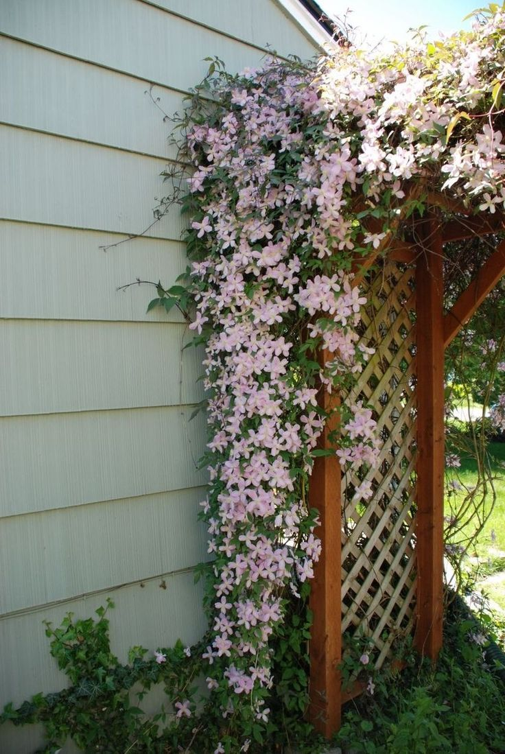 Clematis trellis.  I like the idea of a lush climbing flowering vine over a trellis to fit under on a sunny day.