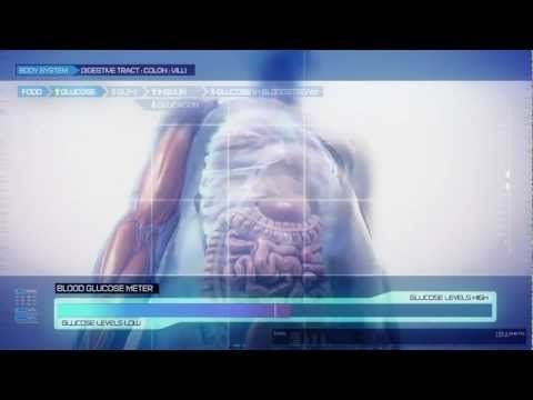 DPP-4 Inhibitors in Action - YouTube