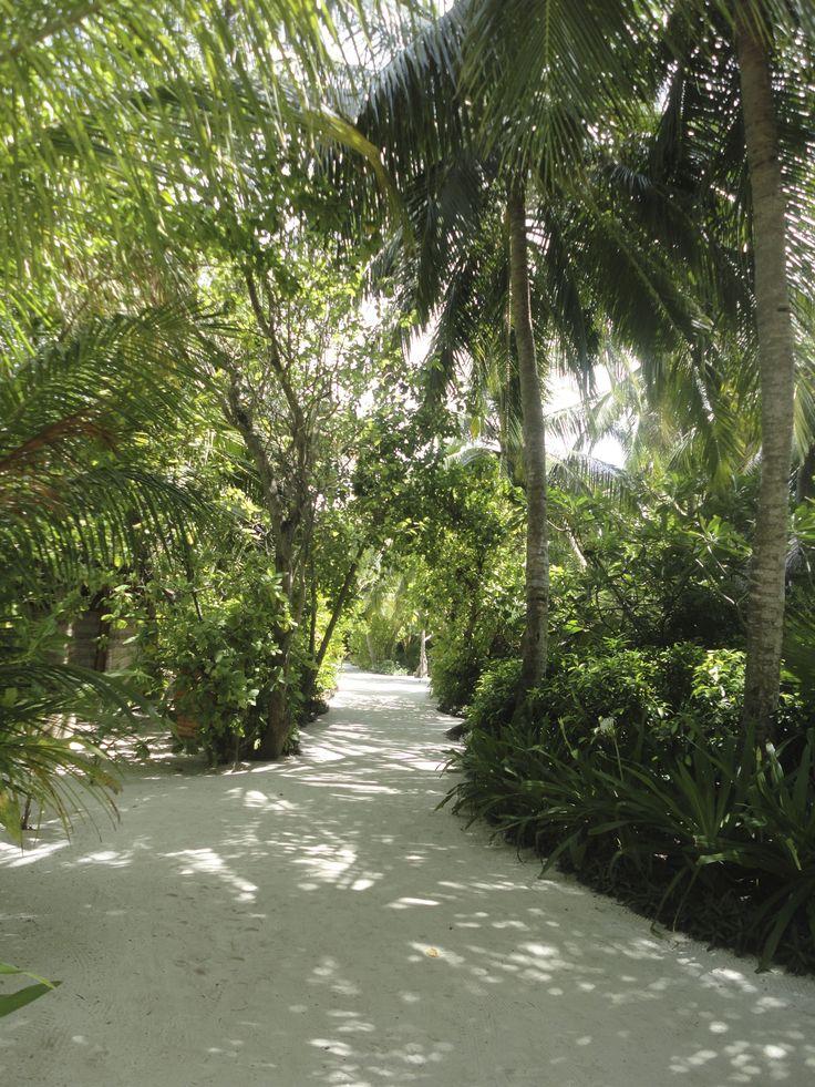 Lieblingsflecken auf den Malediven -  Baros Maldives, Nord-Malé-Atoll