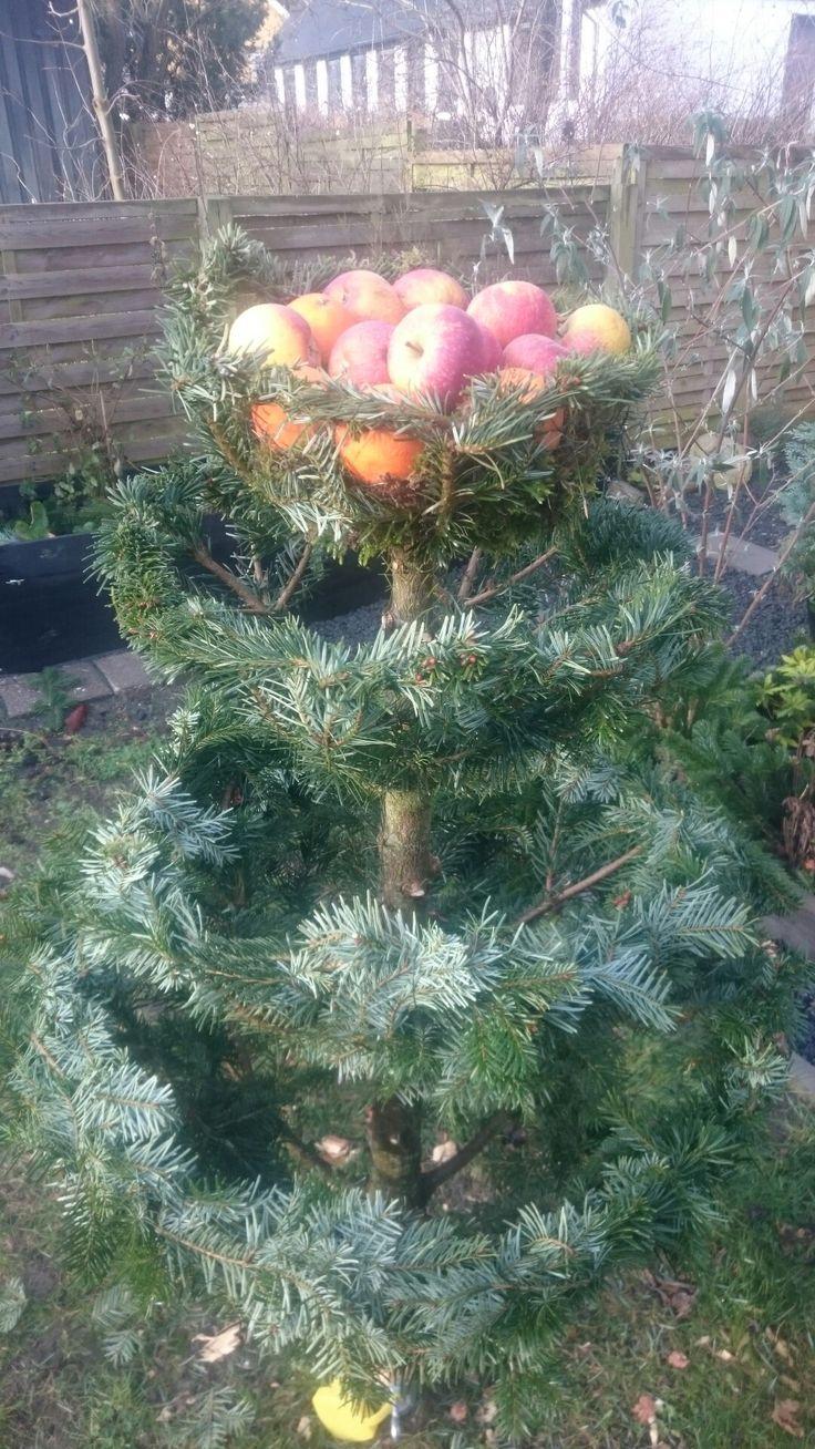 juletræets nye liv