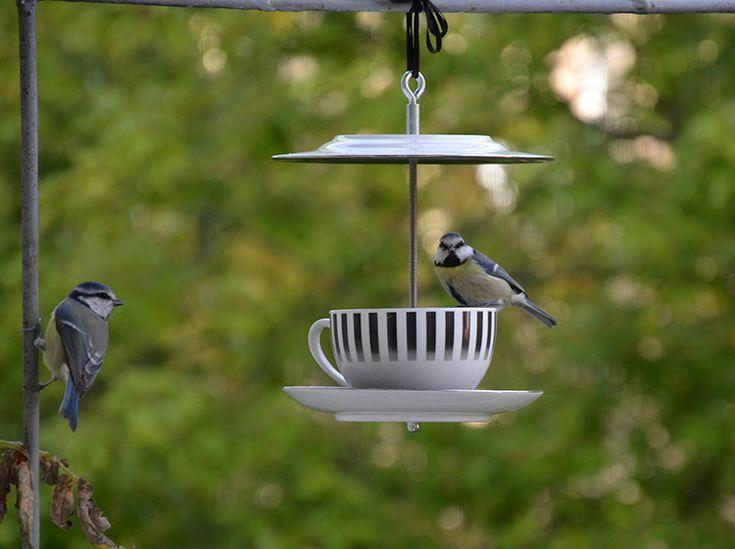 Vogelhaus Kaffeeklatsch